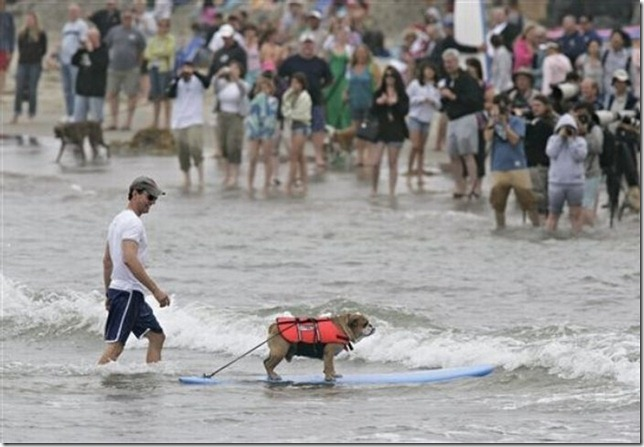dog-surf-11
