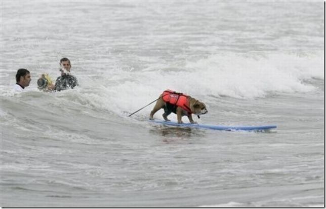dog-surf-12