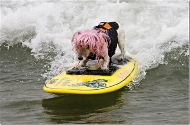 dog-surf-13