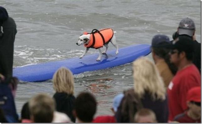 dog-surf-15