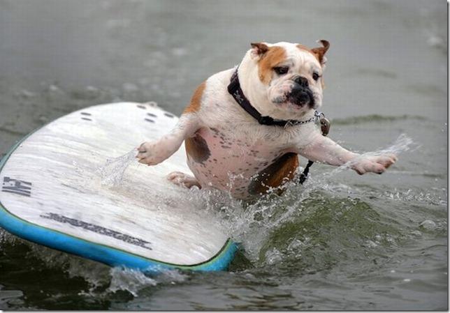 dog-surf-16