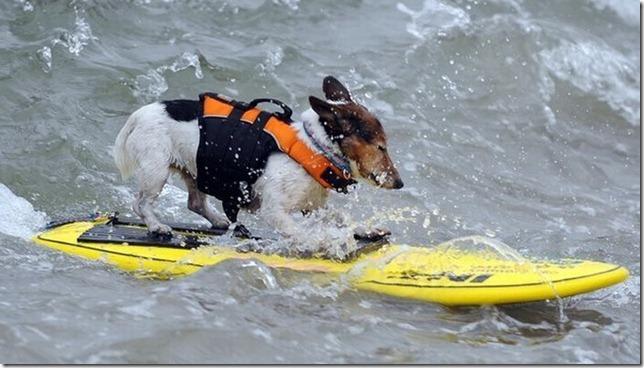 dog-surf-18