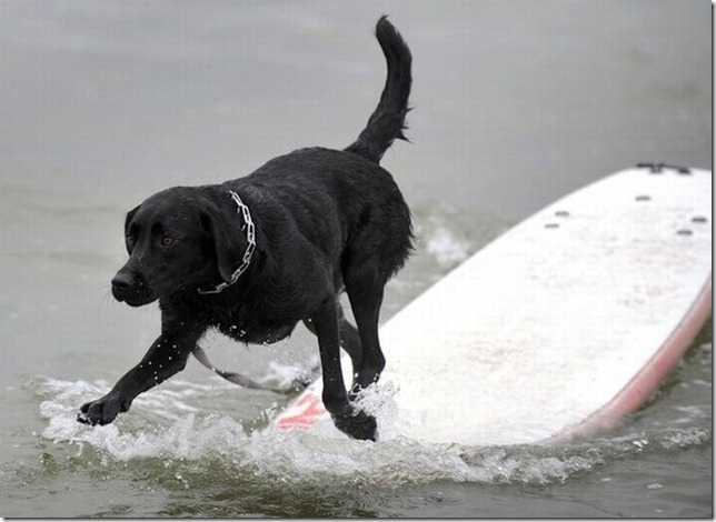 dog-surf-20