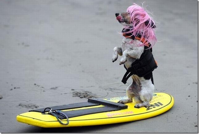dog-surf-21