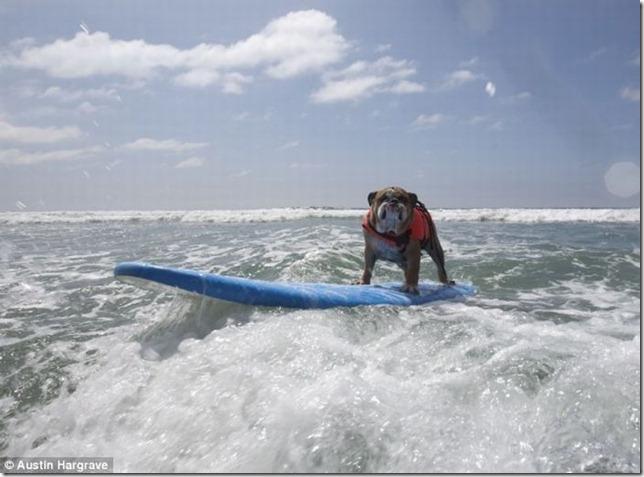 dog-surf-23