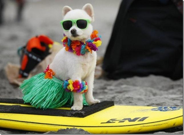 dog-surf-3