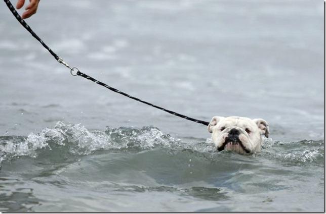 dog-surf-5