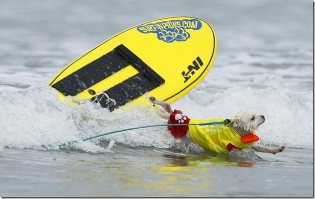 dog-surf-8